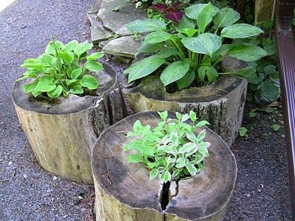 tronchi decorati con piante