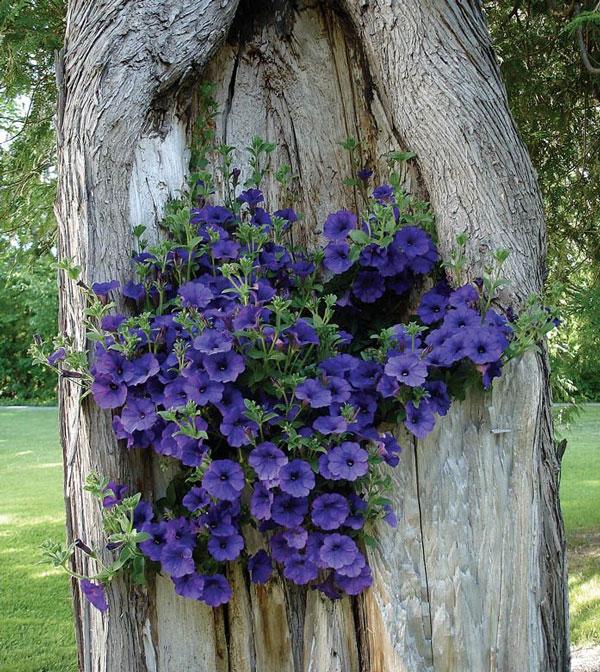 Decorazione tronco 20 idee per decorare un tronco con i fiori - Flowers that grow on tree trunks ...