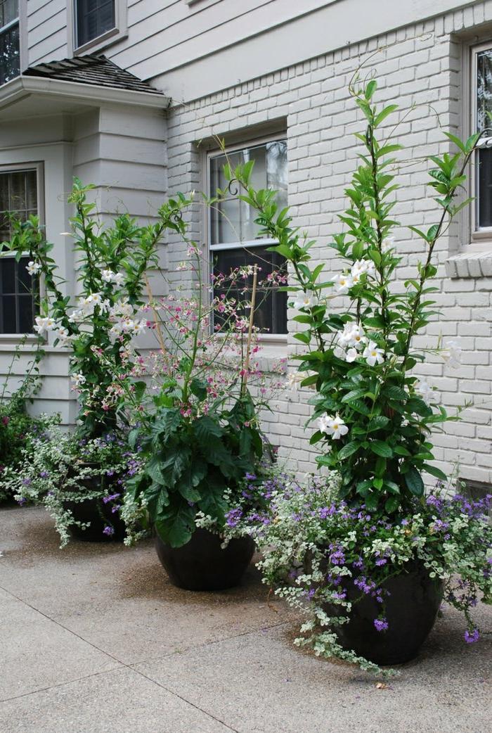 Vasi di fiori 30 idee originali per illuminare il tuo for Progetta il tuo layout di casa