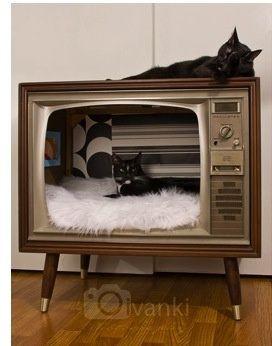 cuccia per gatti creativa