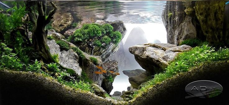 Decorazione originale acquario 17 idee fantastiche per decorare l acquario - Acquario x casa ...