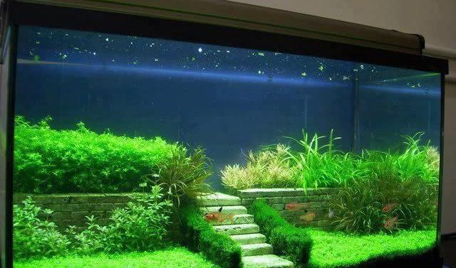 Decorazione originale acquario 17 idee fantastiche per decorare l\u0027acquario!