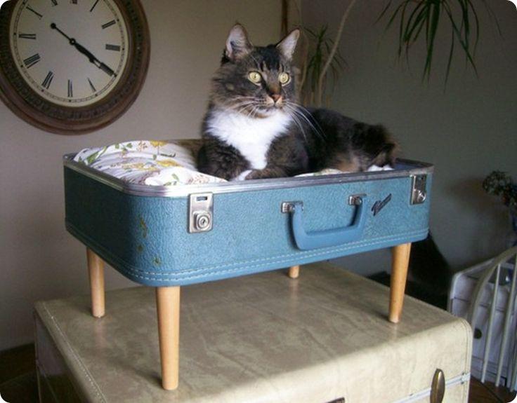 cuccia valigia 15
