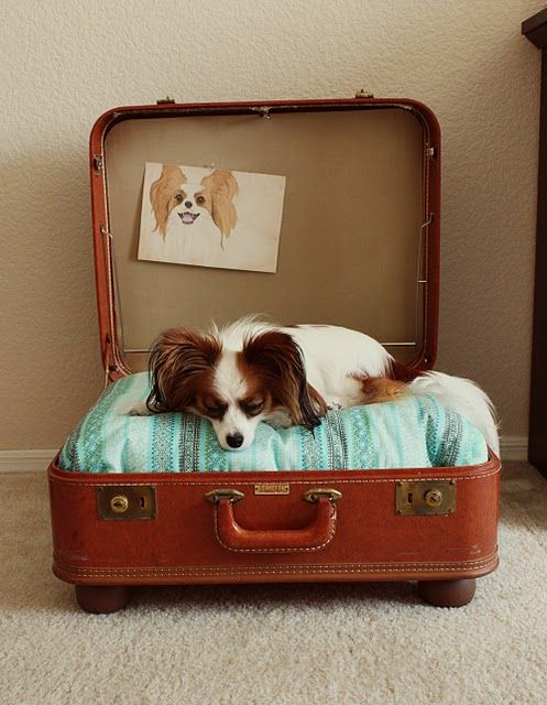 cuccia valigia 7
