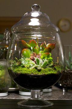 giardini in miniatura fai da te ecco 20 idee creative. Black Bedroom Furniture Sets. Home Design Ideas