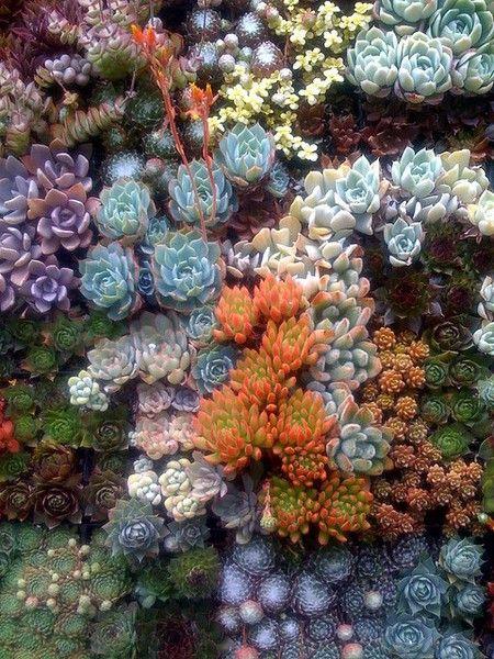 aiuola colorata con bellissime piante grasse