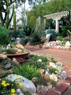 aiuole con piante grasse e fiori gialli, pietre e vasi in terracotta