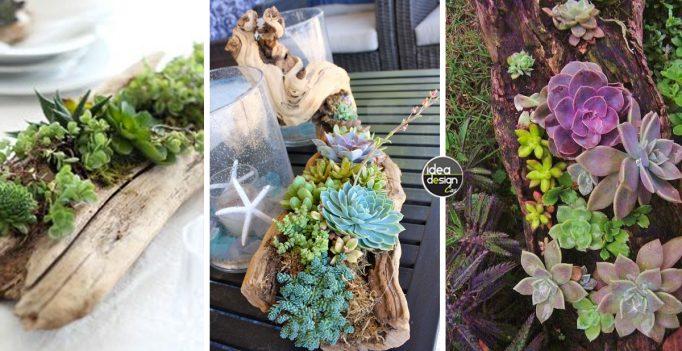 decorare-tronco-con-piante-grasse2