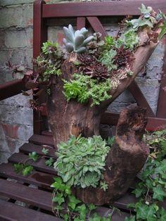 decorazion con piante grasse 11