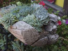 decorazion con piante grasse 12