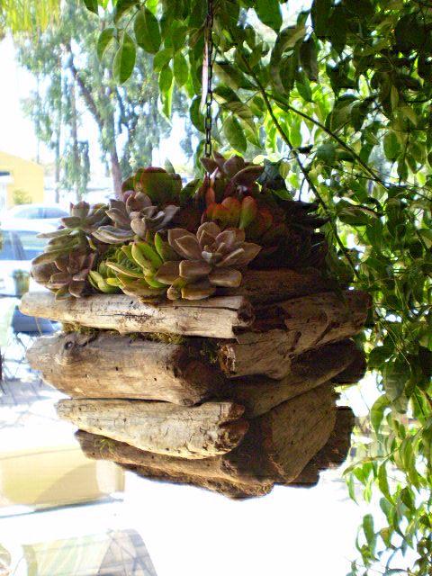 decorazion con piante grasse 120