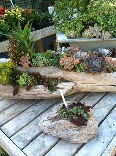 decorazion con piante grasse 16