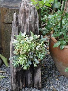 decorazion con piante grasse 19