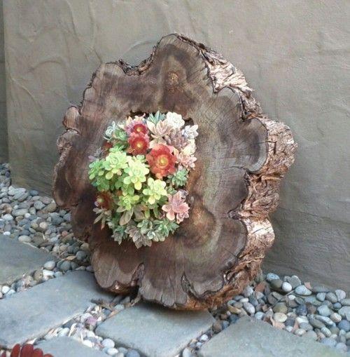 decorazion con piante grasse 3