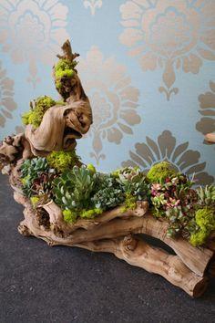 decorazion con piante grasse 8