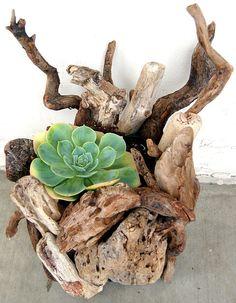 decorazion con piante grasse 9