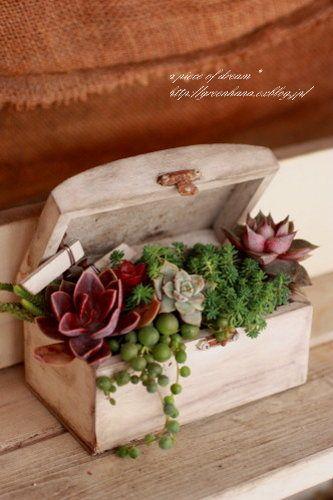 decorazione creativa con piante grasse 10
