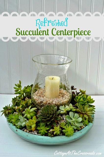 decorazione creativa con piante grasse 12