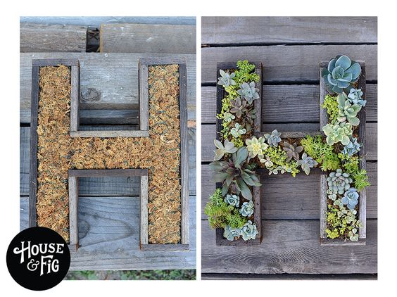 decorazione creativa con piante grasse 2
