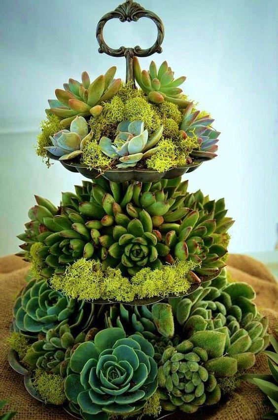 decorazione creativa con piante grasse 8