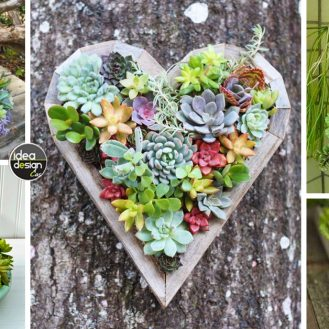 decorazione-creativa-con-piante-grasse1