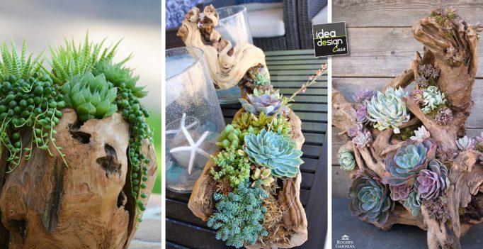 Decorare tronco con piante grasse 20 idee creative for Aiuola piante grasse