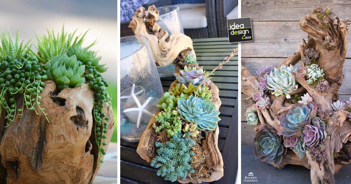 Decorare tronco con piante grasse 20 idee creative for Decorazioni giardino aiuole