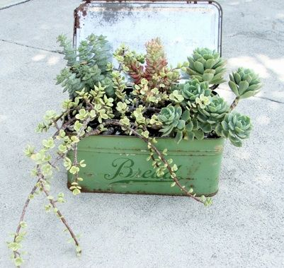 idee decorazioni piante 18