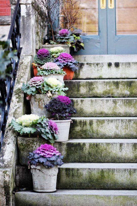 scale con i fiori 13