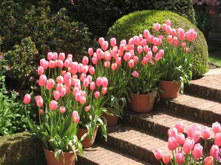 scale con i fiori 16