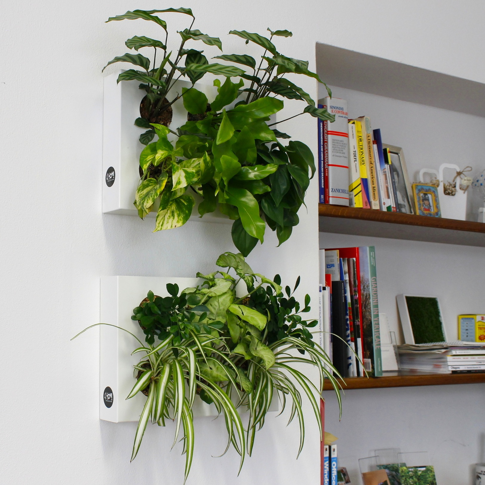Quadri vegetali fai da te 16 idee per decorare casa - Pareti verdi per interni ...