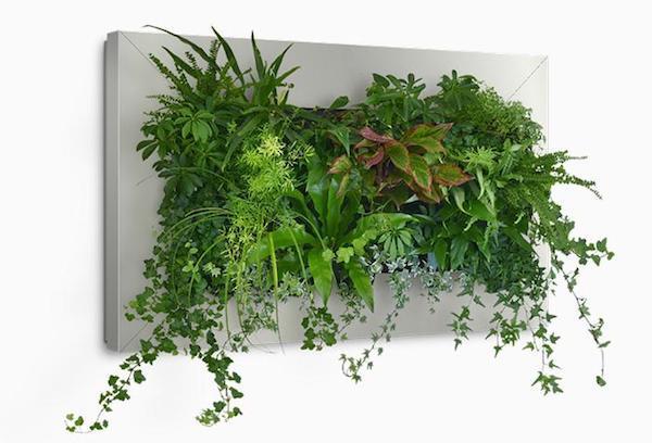 plante interieur design