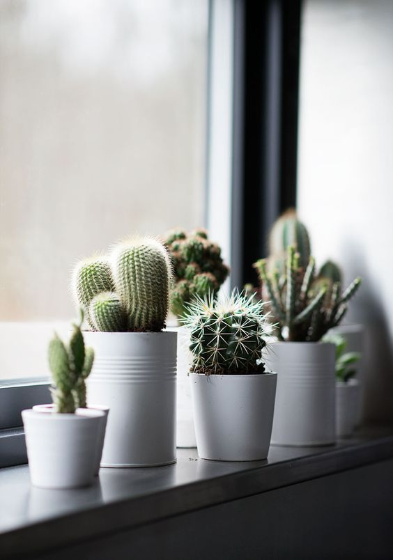 decorare con dei cactus 1