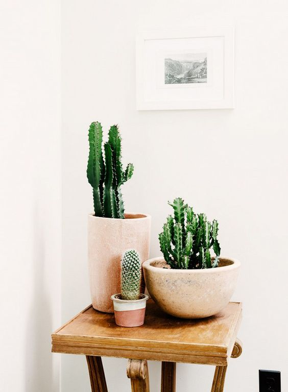 decorare con dei cactus 15