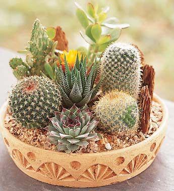 decorare con dei cactus 19