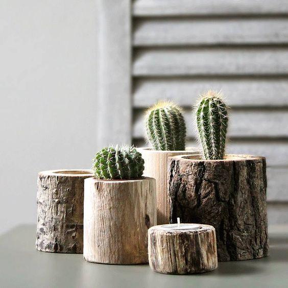 Piccoli Cactus Per Decorare Casa Ecco 20 Idee Creative