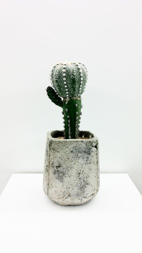 decorare con dei cactus 3