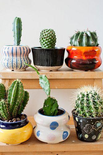 decorare con dei cactus 5