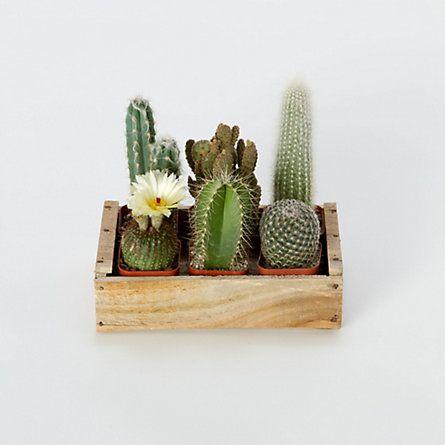 decorare con dei cactus 8
