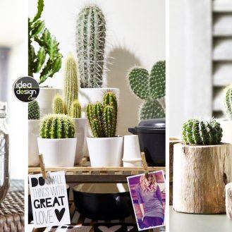 decorare-con-dei-cactus-idea-n-1