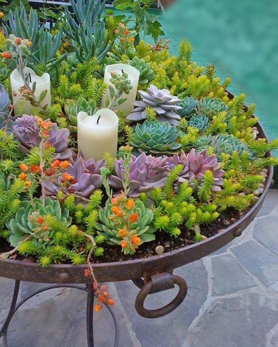 decorazioni originali con piante 12