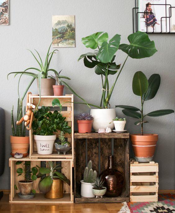 angolo-piante-casa-1