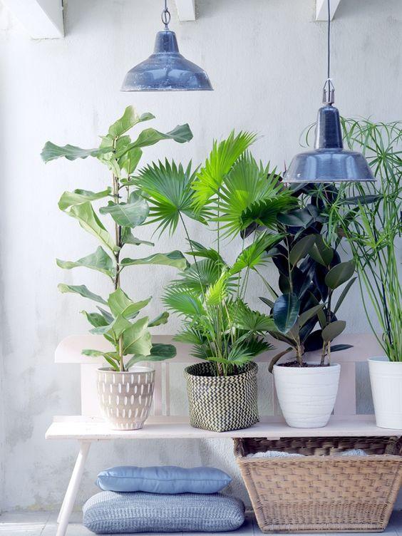 angolo-piante-casa-14