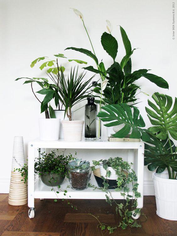 angolo-piante-casa-18