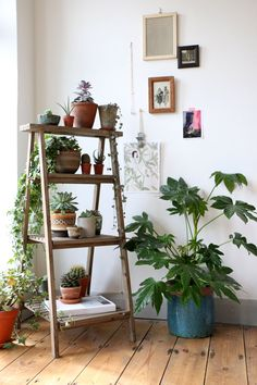angolo-piante-casa-2