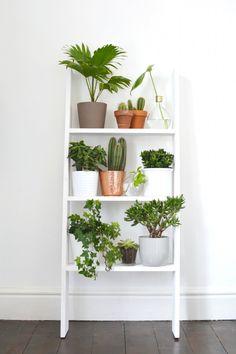 angolo-piante-casa-3