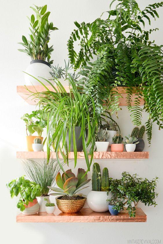 angolo-piante-casa-6