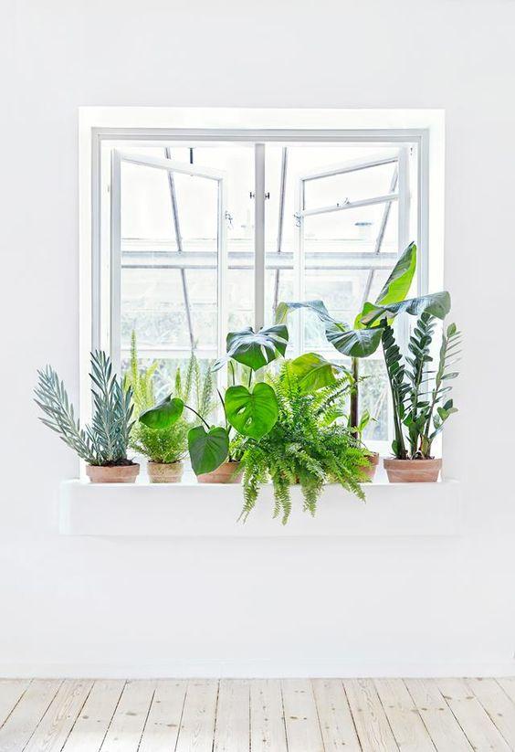 Creare un angolo verde