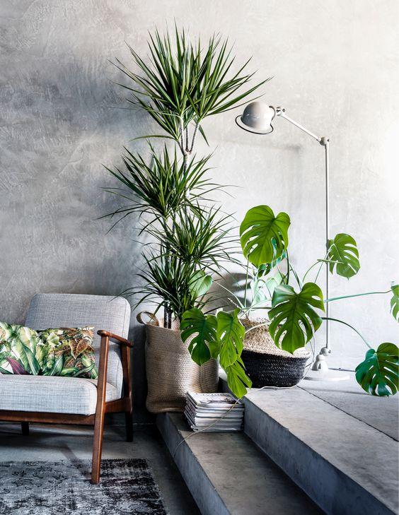 angolo-piante-casa-8