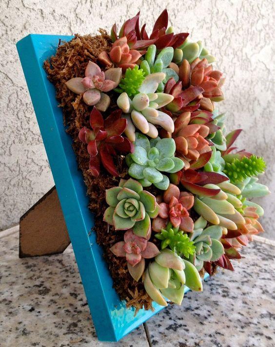 Porta Piante Fai Da Te : Un quadro di piante grasse idee stupende video tutorial